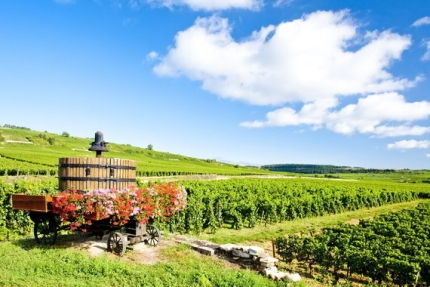 Vineyards of Burgundy Hike with Active Journeys - escorted adventure travel or self-guided adventure travel tours and holidays